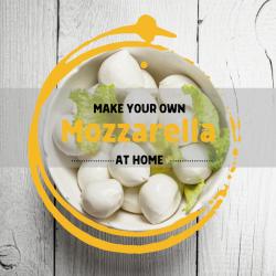 Mozzarella Starter Kit